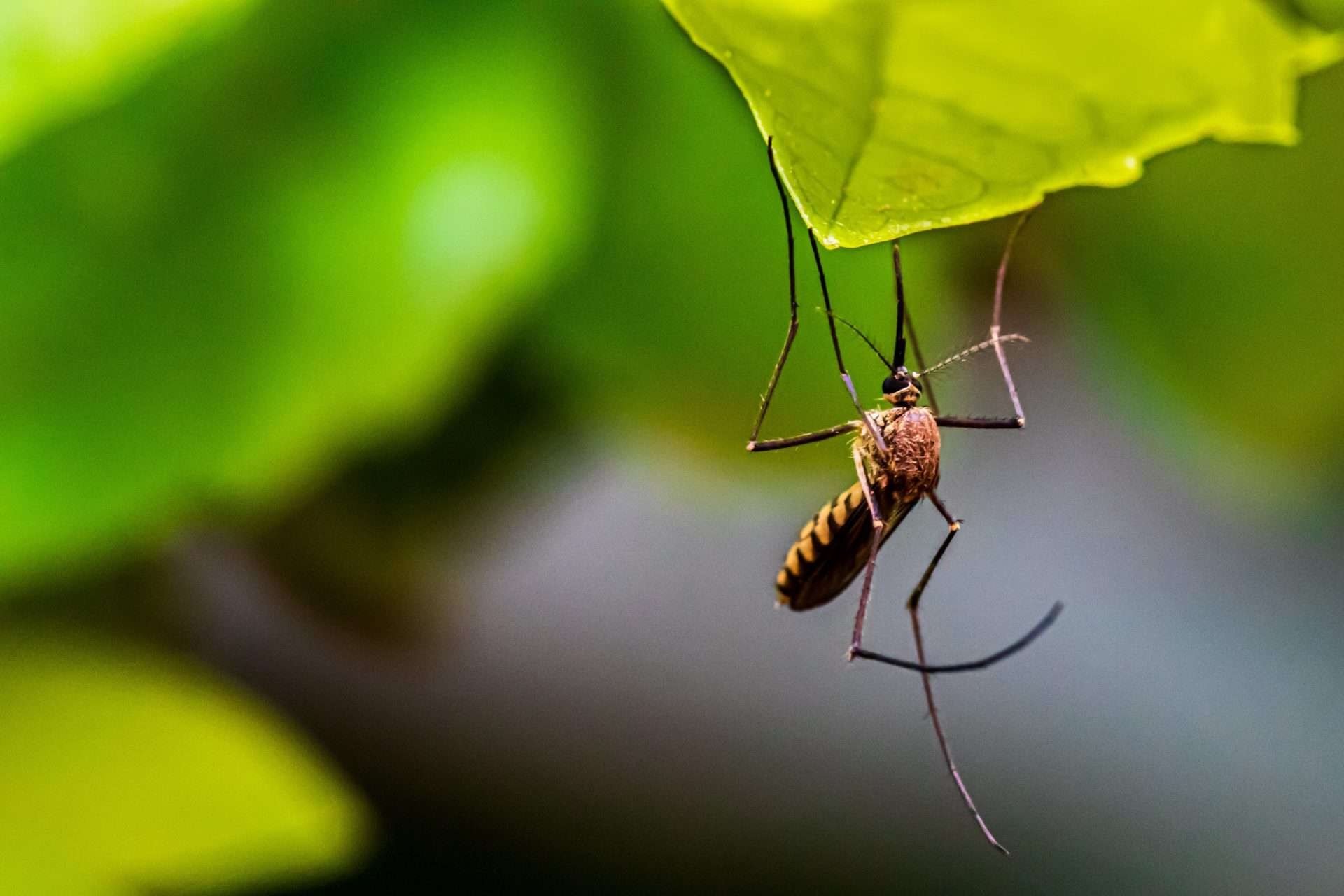 Wie man juckende Mückenstiche auf natürliche Weise schnell wieder los wird